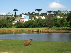 Curitiba-Biodiversité-urbaine-pacaepinheiros