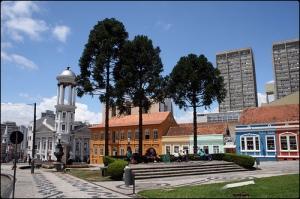 """Araucarias"" in Curitiba's historical district"