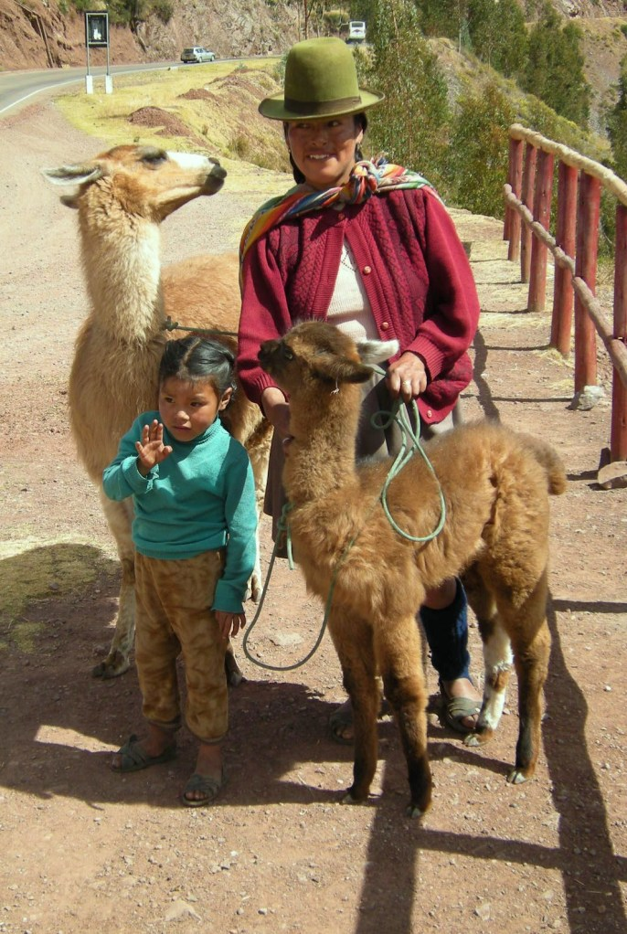 These are llamas.
