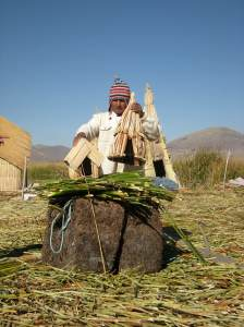Houses are built on top of the reed layers. Buildings are also made of totora reeds.