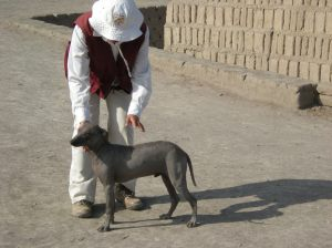 This hairless dog is apparently a regular visitor to the site!