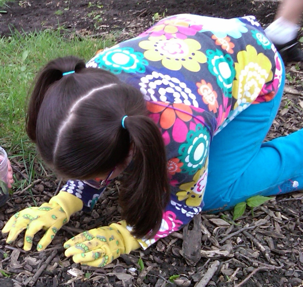 Bug day - the children dig for worms and other bugs.