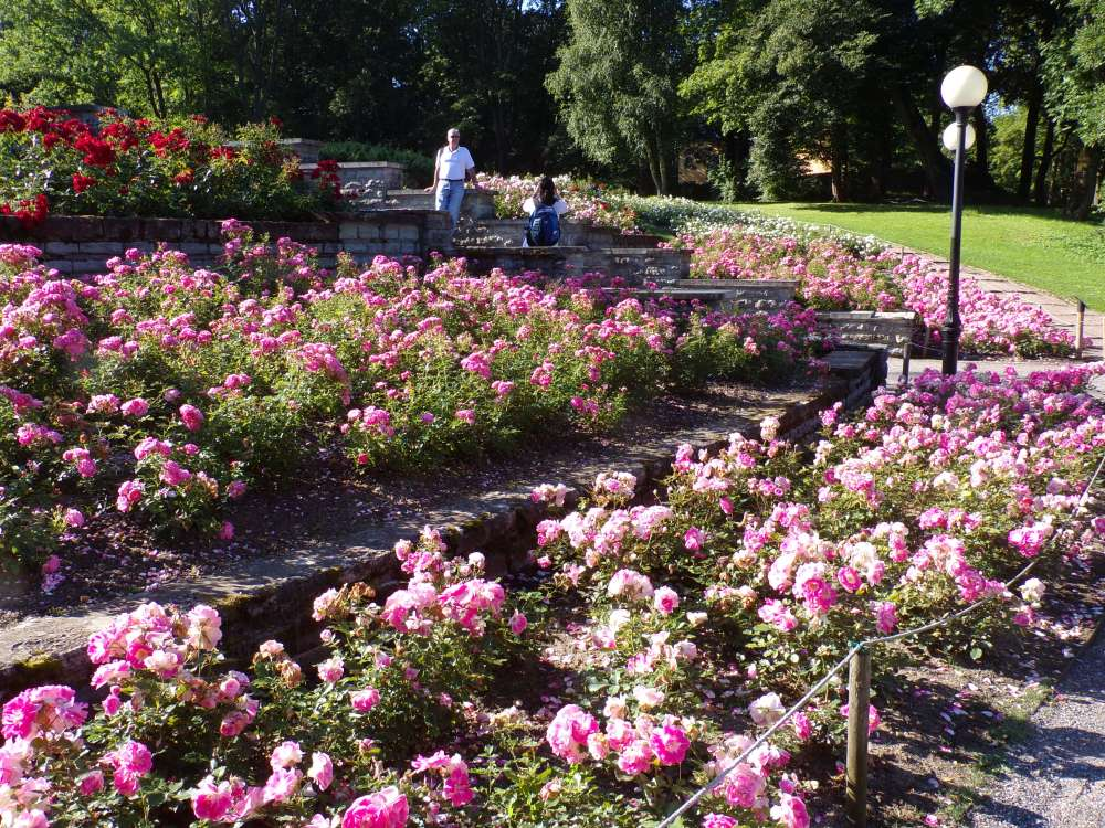 The circular rose garden flanks the steps leading up the hill to the museum.