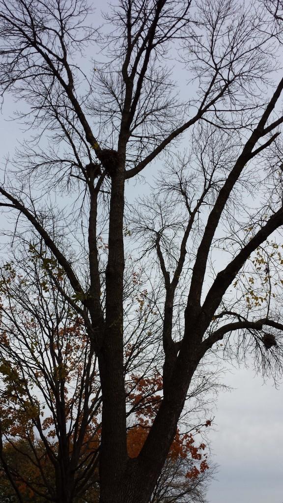 3 nests