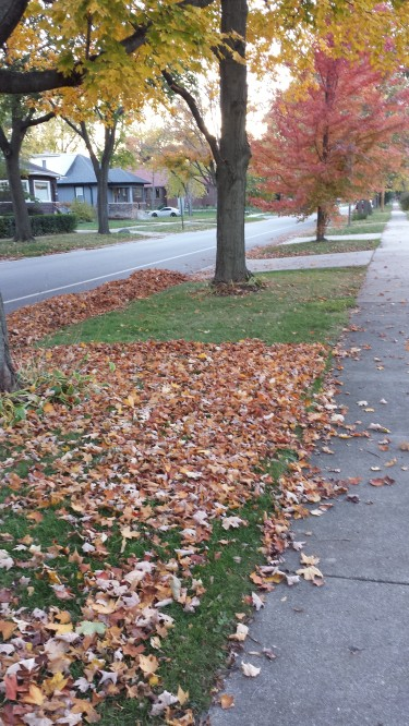 One neighbor cleared the leaves off his lawn, the neighbor next door didn't.