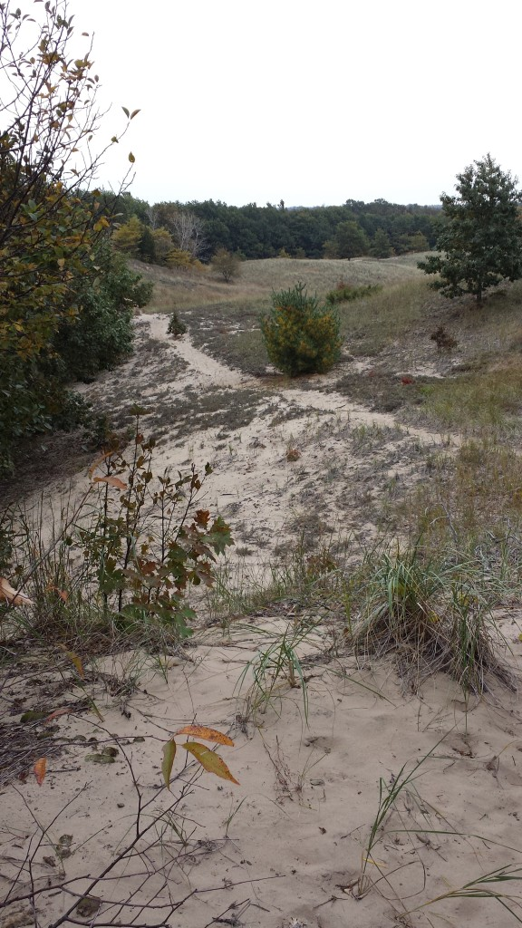Where does this dune path lead? Saugatuck Dunes State Park, Michigan