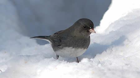 02suttons-snowbirds2