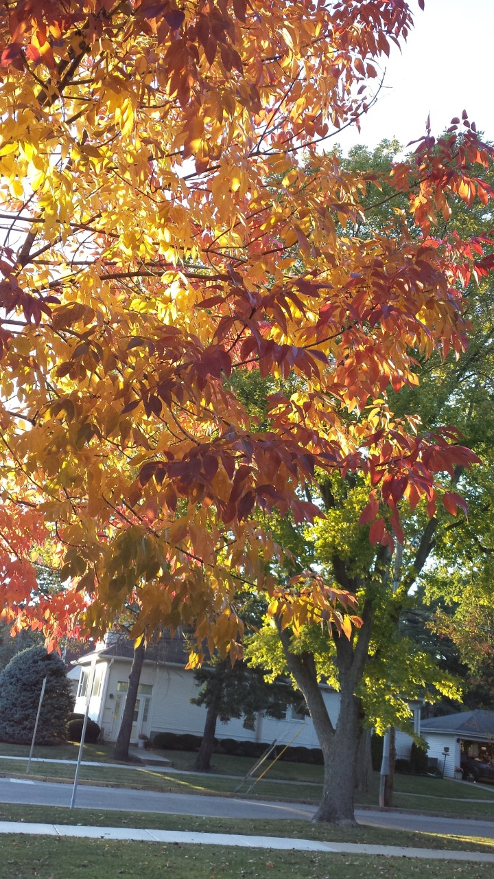 Shades of red,yellow and orange