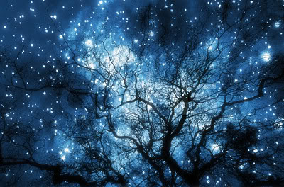 night sky thru trees
