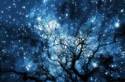 night sky thru trees