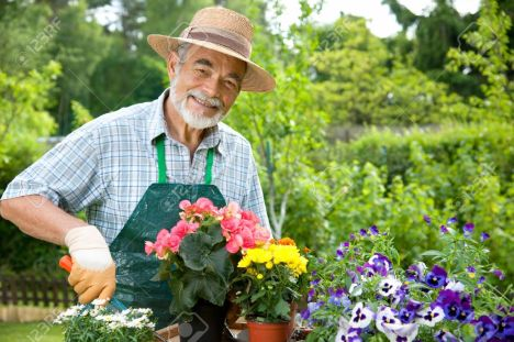 senior-man-gardening