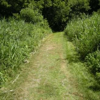 Dale didn't want to walk, so I took a trail by myself.