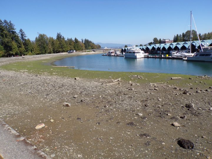 "This picture is to show how the ""beachfront"" looks at low tide."