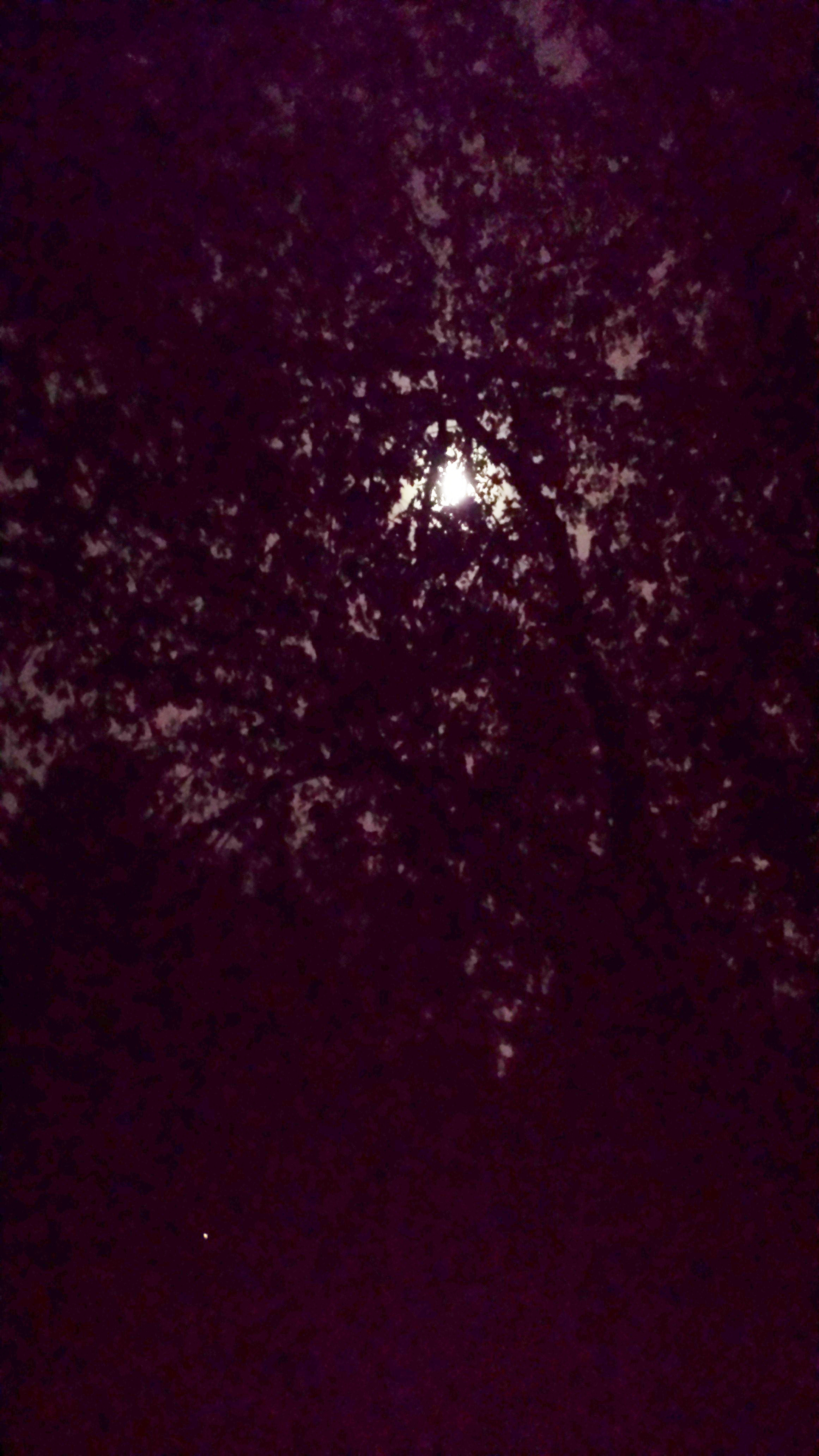 Full moon filters through the canopy of leaves above our deck.