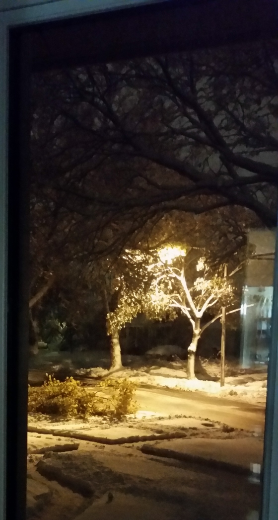 Snowy evening: street light illuminates a snow-laden tree