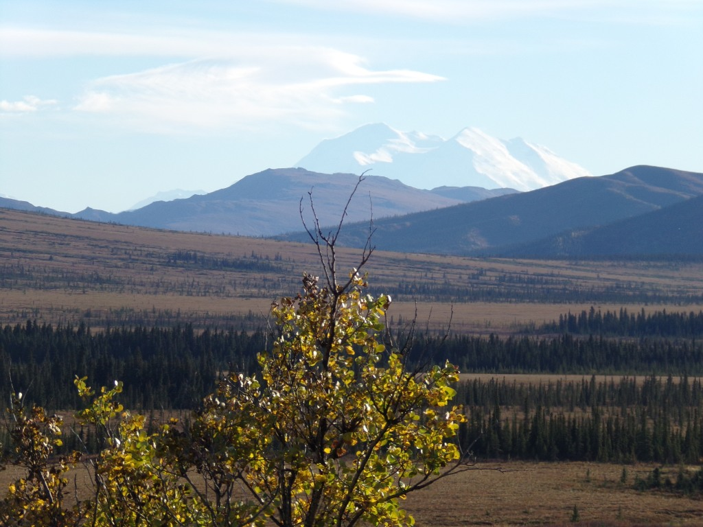 Gorgeous view of Denali
