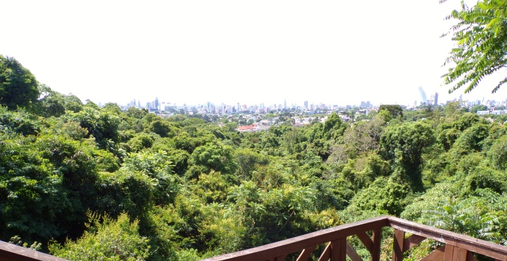 View of native forest - Bosque Alemao