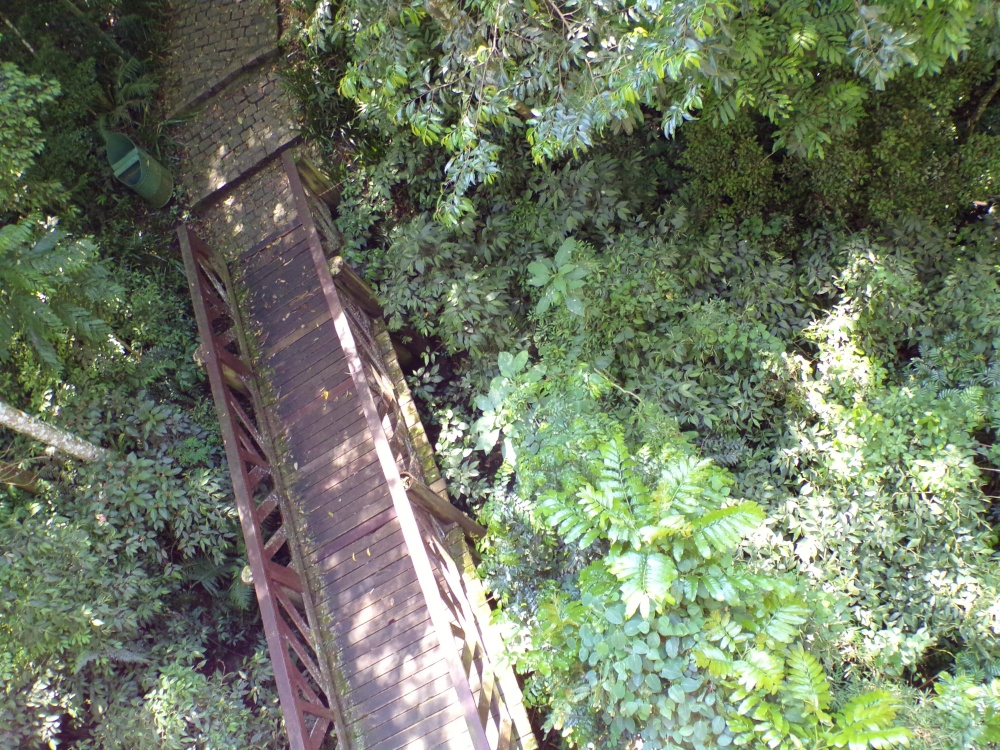 Looking down on bridge - Bosque Alemao