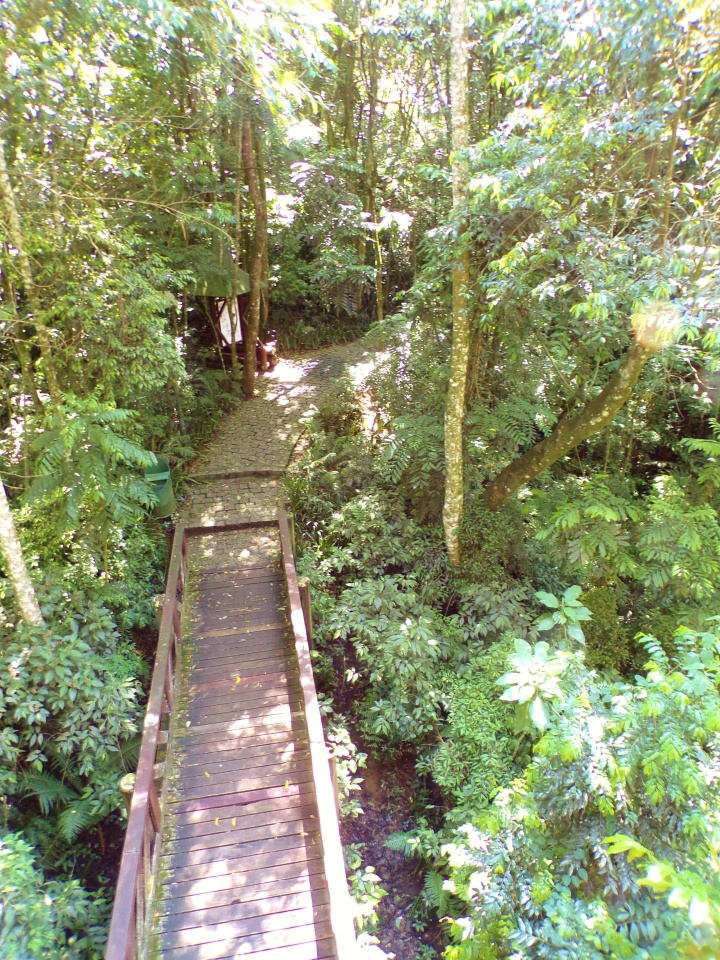 Walkway from above - Bosque Alemao