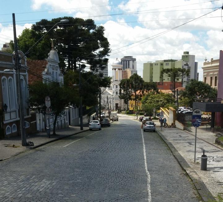 Street with many araucarias