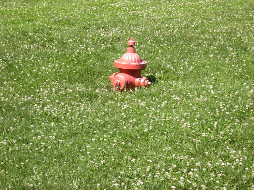 I saw this curious sight: a half-buried fire hydrant, surrounded by clover!