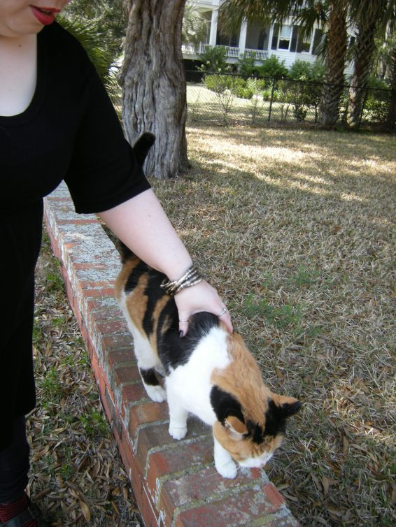 Tam makes friends with this friendly calico cat.
