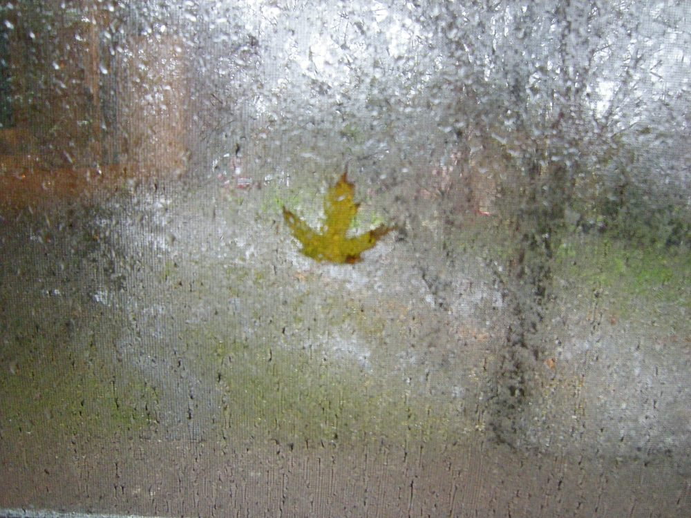 Another view of leaf on window during storm