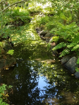 Reflections in a stream