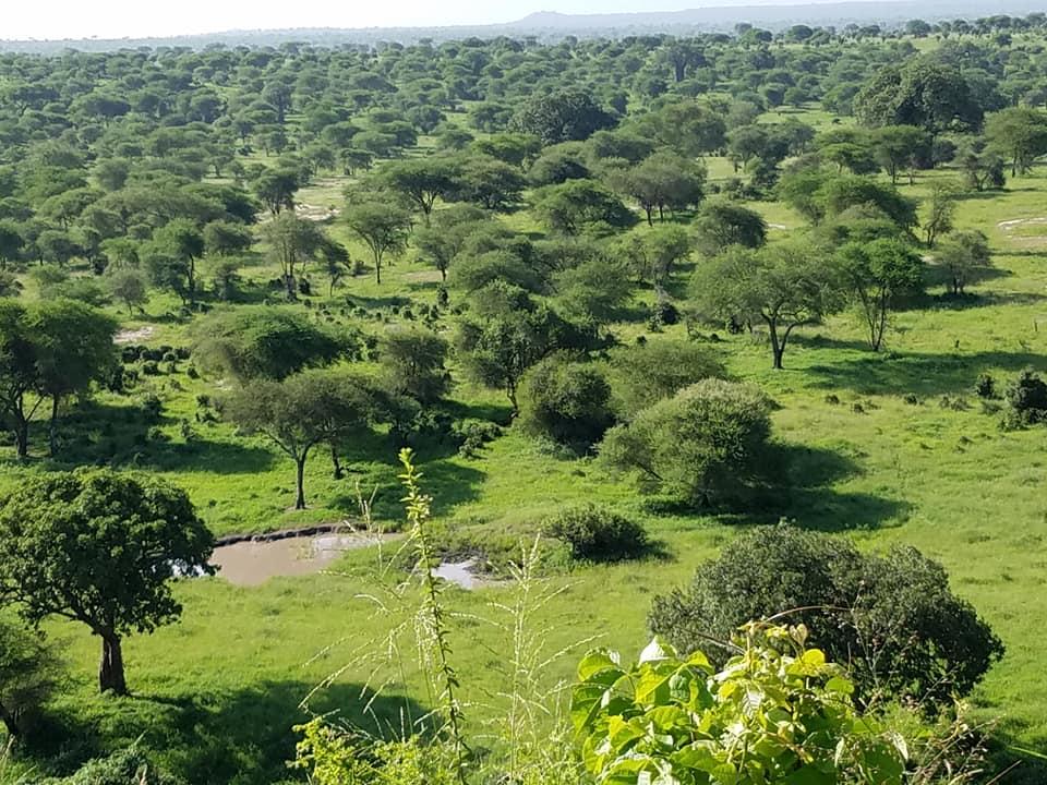 2-5 scenic view of Tarangire NP