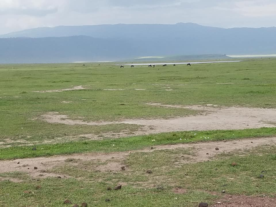 2-6 wildebeest in distance-Ngorongoro Crater
