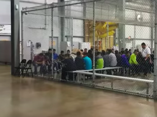 immigrants in cages