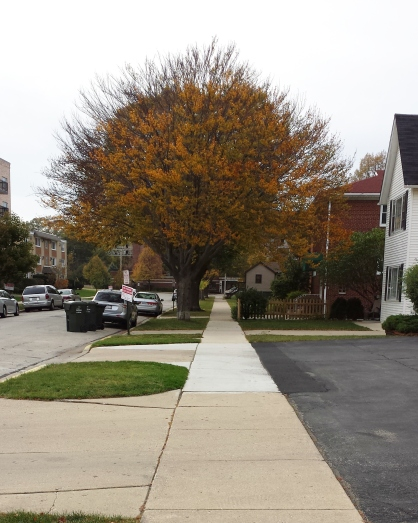"""A bare tree behind the tree with an orange canopy makes it look like one tree with a """" 'fro""""!"""