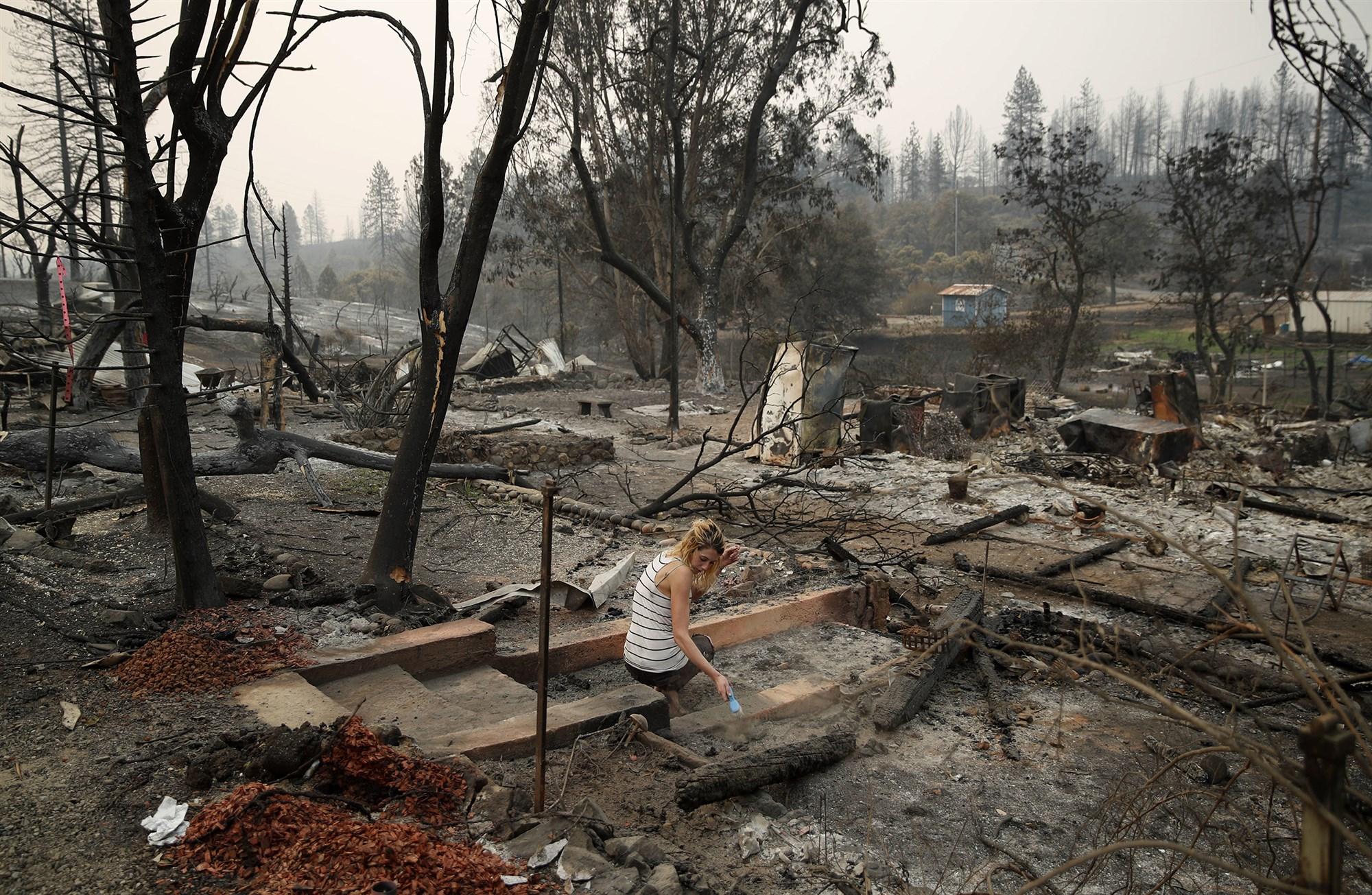 california lost 18 million trees in 2018.jpg