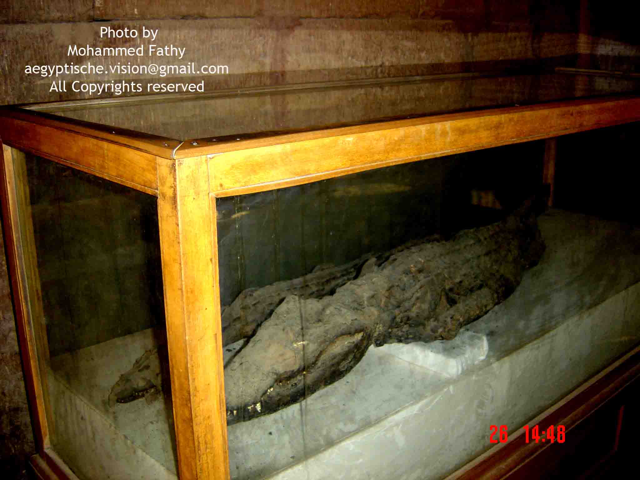 Kom Ombo  (41)-crocodile museum.jpg