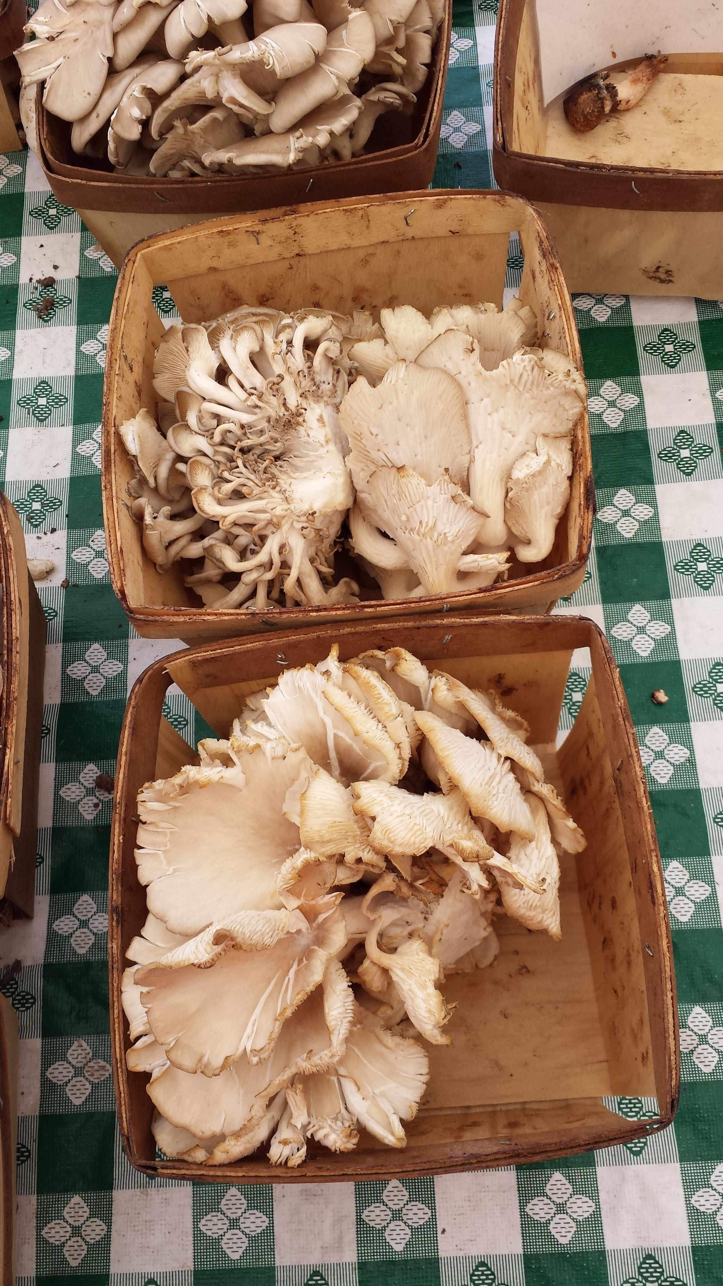 Weird mushrooms at Park Ridge farmer's market