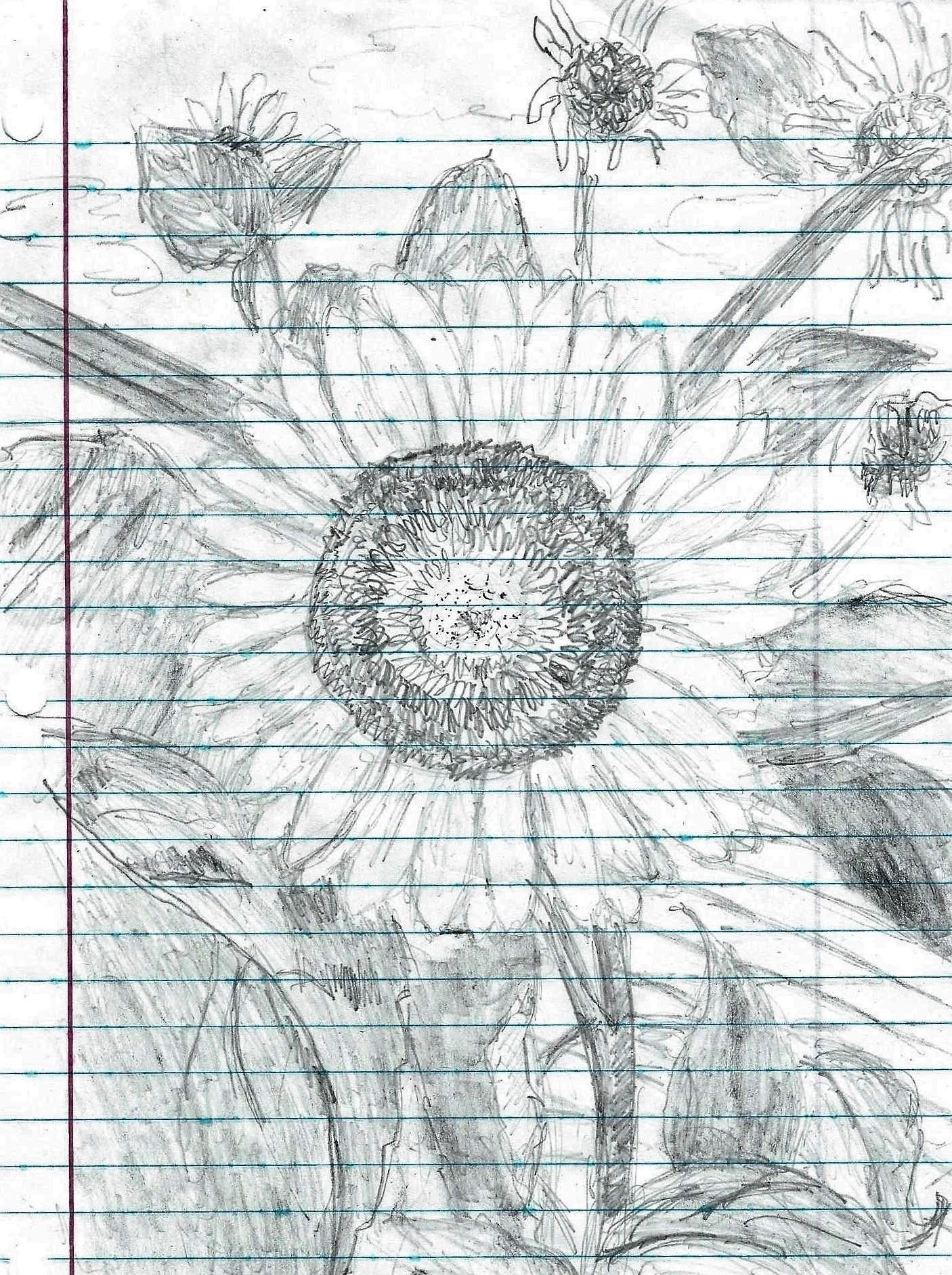 sunflower-aug.-18.jpg