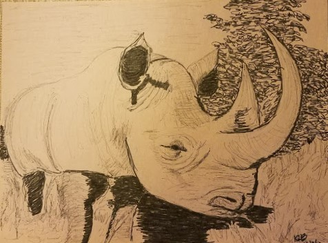 20191209_153532 Rhino - pencil & pigment liners.jpg