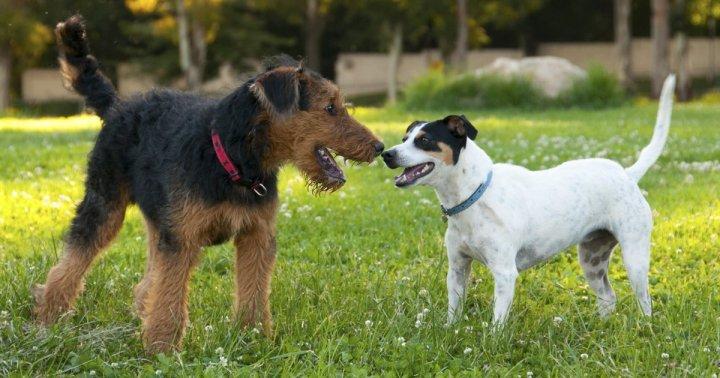 how-do-dogs-greet-each-other.jpg