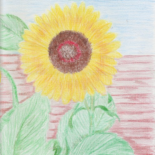 Sunflower 2019-11 (colored pencils)