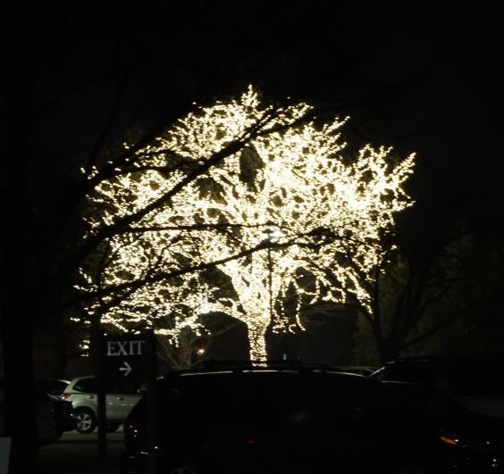 Tree full of lights