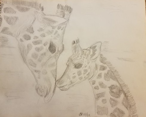 Giraffes 19-12-2 (pencil)