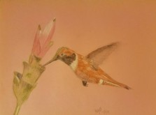 Hummingbird 19-12-3 (colored pencils on pink construction paper)