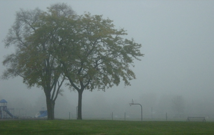 Trees in back of Sullivan on a foggy morning. (Taken from the parking lot)
